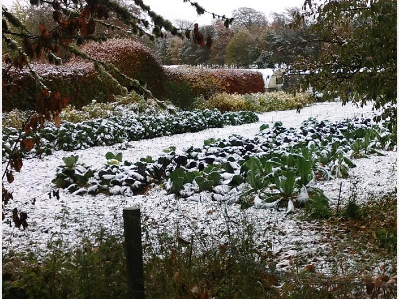 Wintergarden4.jpg