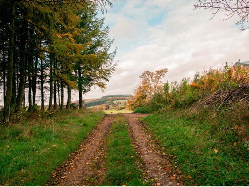 Autumn Road3.jpg