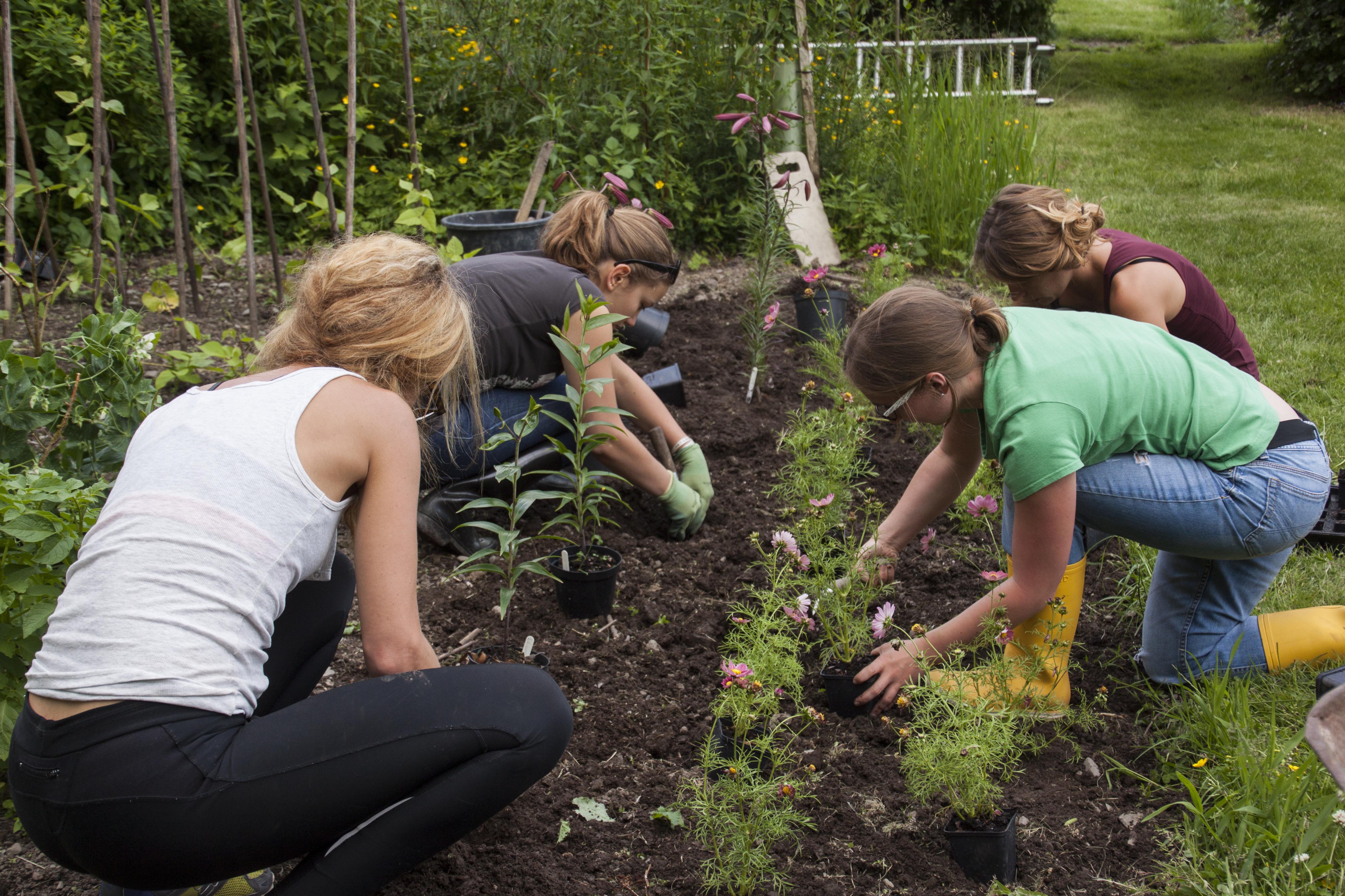Garden_Working.jpg