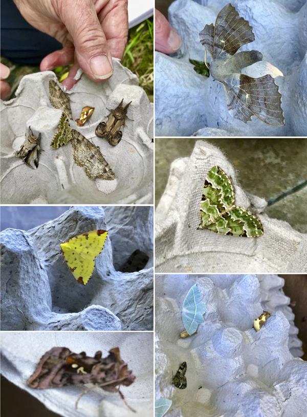 Moths3.jpg